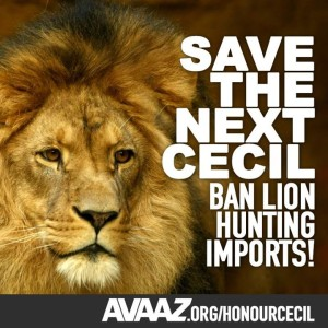 Save the next cecil